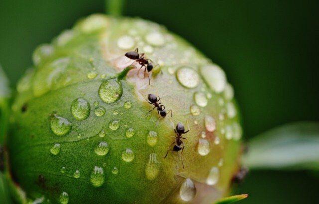 Nieproszeni goście – jak pozbyć się mrówek?