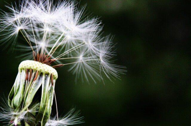 Jak wyleczyć alergię w prosty sposób?