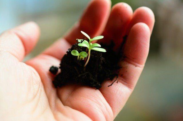 Najprostsze rośliny do uprawiania w swoim ogródku
