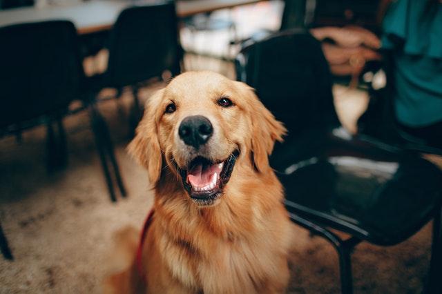Atrakcyjny i solidny identyfikator dla psa miłym i przydatnym upominkiem dla jego właściciela